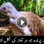 Bird who takes out all kinds of sound