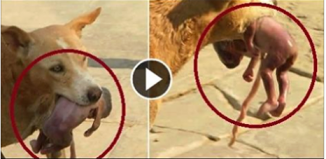 dog save new born baby in thailand