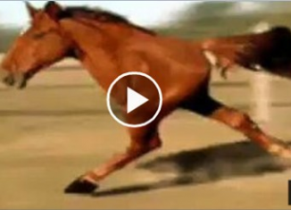 Unbelievable visuals of wildlife