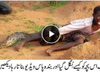 Boy Attacked by Snake as Photographers Watch