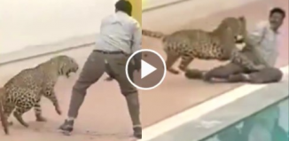 Wild animal attack captured on tape