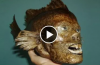 News of fish puts world in shock