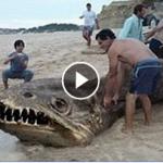 Monster Snake near Beach