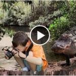 biggest crocodile attack girl