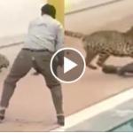 Wild animal attack captured on tape